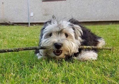 Yummy stick